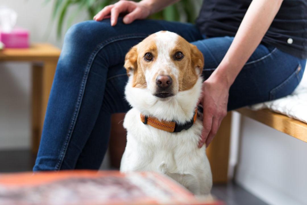 Warteraum der Tierarztpraxis Linth AG in Tuggen