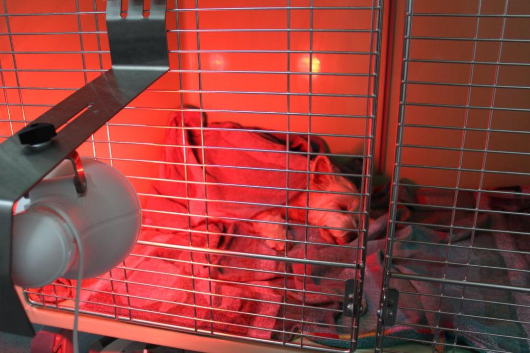 Hospitalisation für Kleintiere bei Tierarztpraxis Linth AG