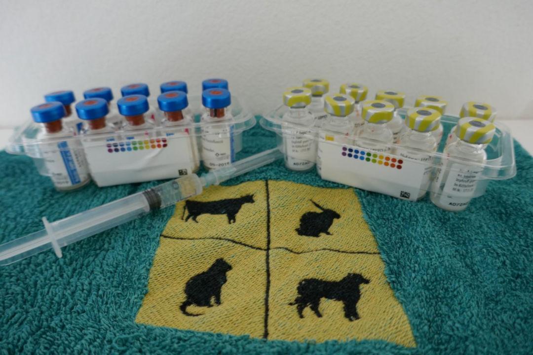 Impfung Hund