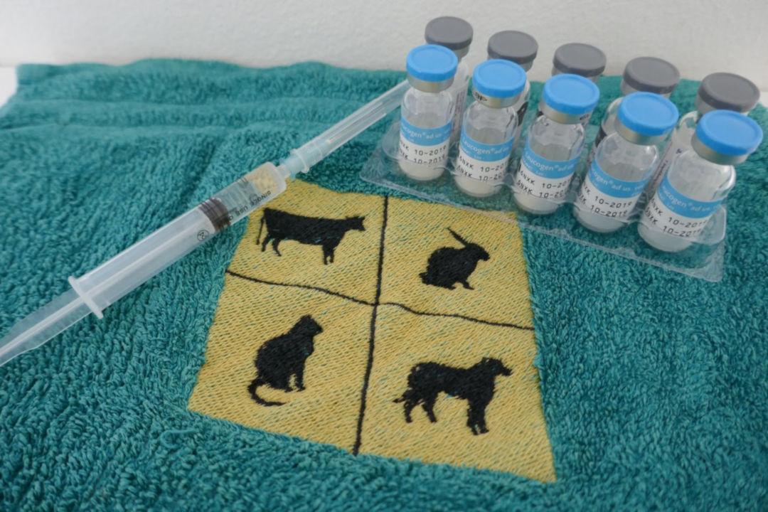 Impfung Katzen