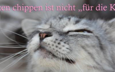 Katzen Kastrations- und Chipaktion