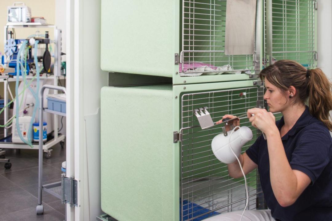 Patientenraum - Räumlichkeiten bei der Tierarztpraxis Linth AG in Tuggen