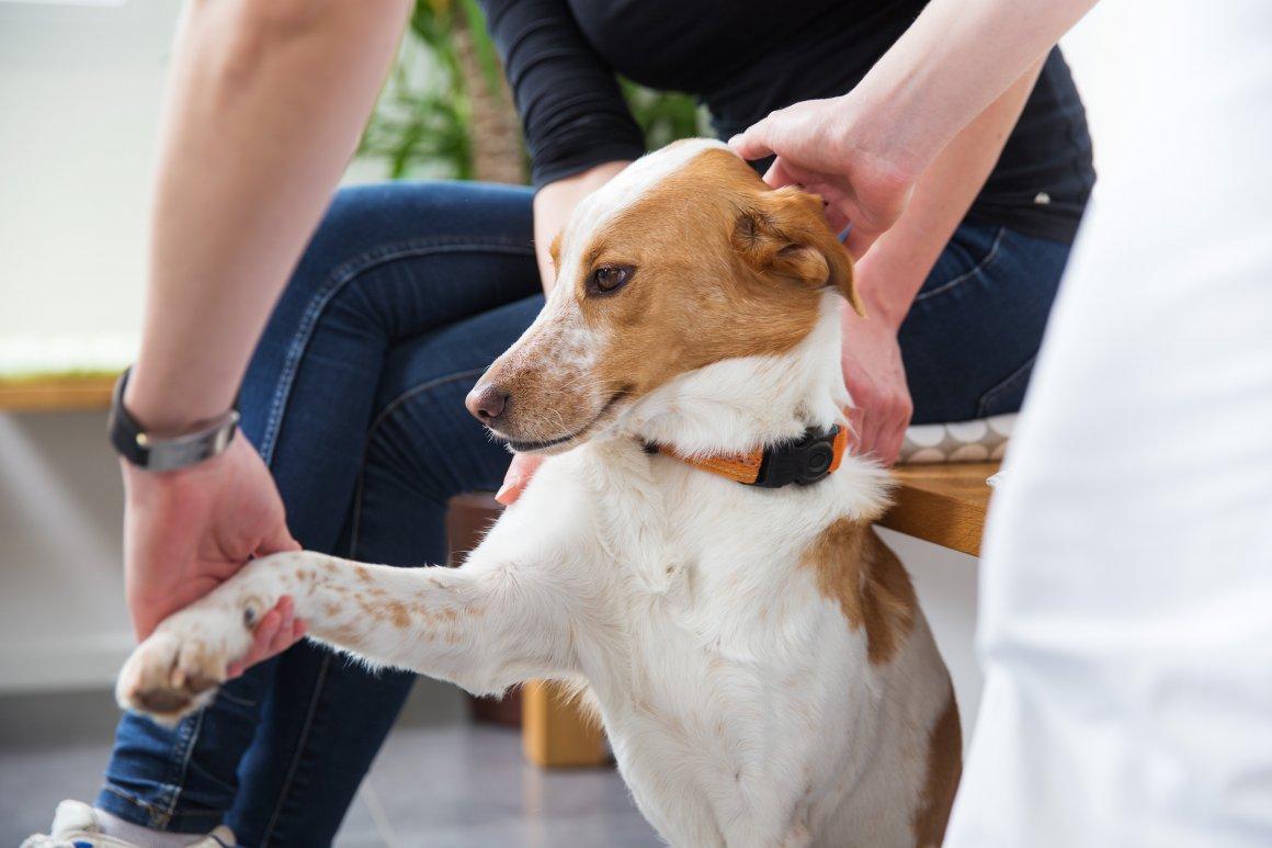 Sprechstunde für Kleintiere bei der Tierarztpraxis Linth AG in Tuggen