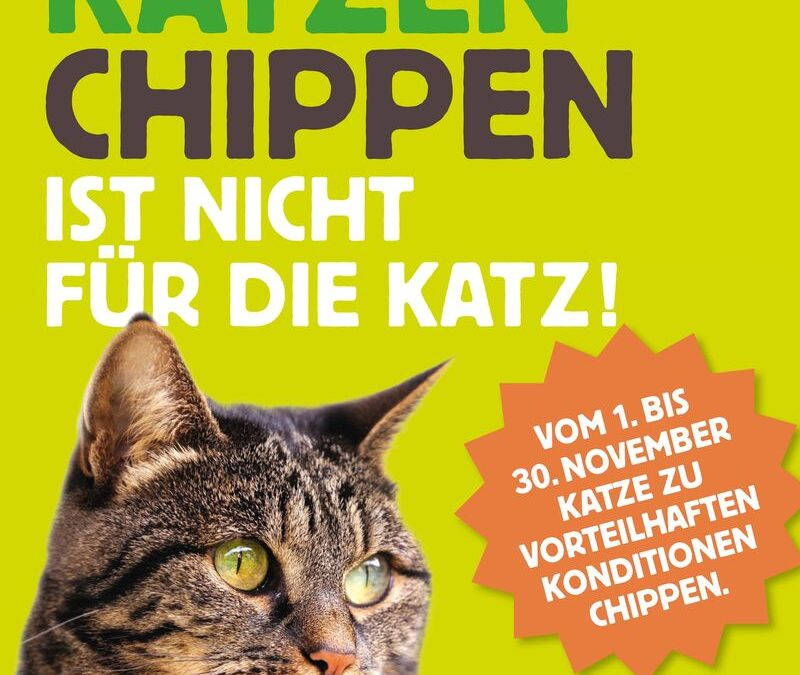 Katzen Chipaktion im November
